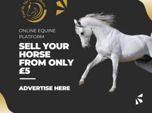 Sell Your Horse With Us